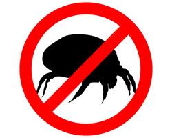 Keine Milben